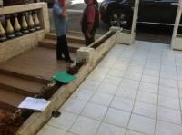 Préparation du chantier, prise de mesures et date d'intervention